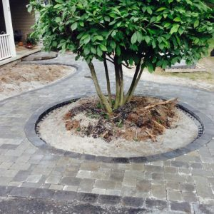 tree-patio